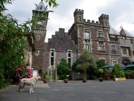 Craig Y Nos Castle Wedding Venue Swansea Front Courtyard With Sheeba White Alsation In The Foreground