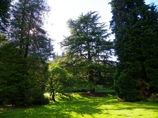 tall trees in the Lower Gardens Craig y Nos Castle South Wales
