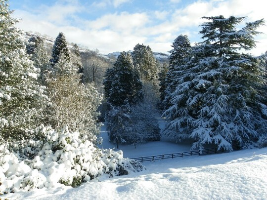 Snow covered tall trees and gardens at Craig y Nos Castle Winter Wedding venue South Wales