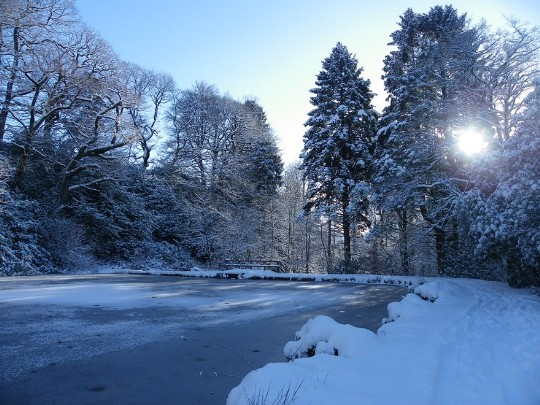 Craig y Nos Country park, snow covered lake and paths, tall snow covered trees