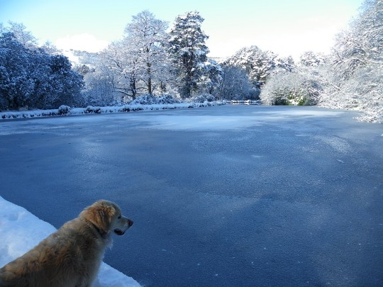 Craig y Nos Castle Country Park large lake covered in ice, paths and trees snow covered